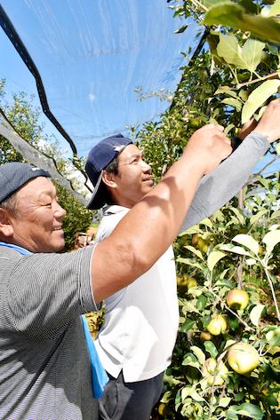 果実を取る農家の方々
